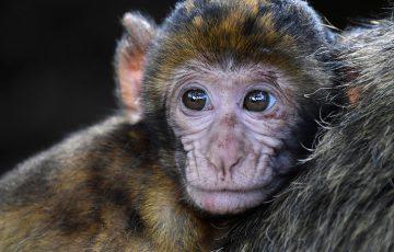 メンエスの接客のコツを猿でも分かるように徹底的に解説します!